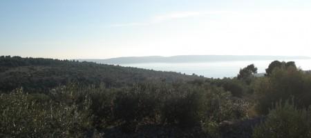 Terrain agricole avec vue mer, au sommet de l' île de Čiovo !