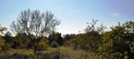 Trogir, Ile de Ciovo terrain constructible
