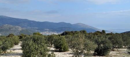 Marina, Croatie terrain agricole, vue mer